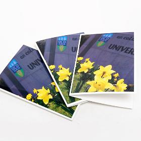 UCD Greeting Cards